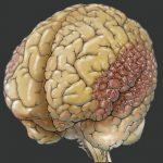 role of human brain in genetics play