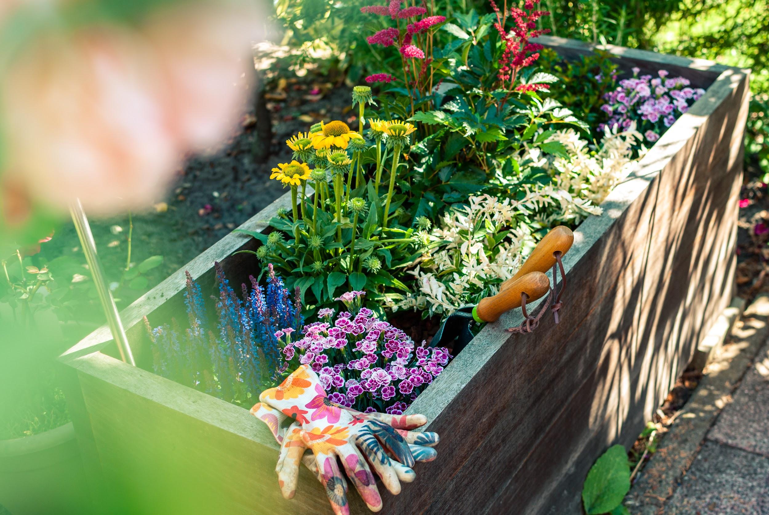 5 Garden Ideas for Healthier Outdoor Spaces