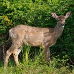 stop deer from eating plants