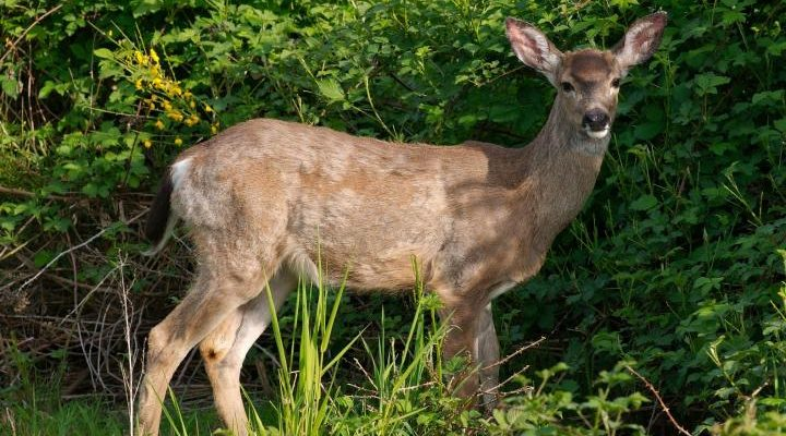 How to Keep Deer from Eating Your Trees This Winter