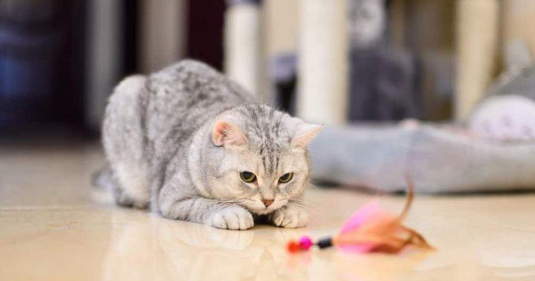 5 Ways to Use Positive Reinforcement for Good Cat Behavior