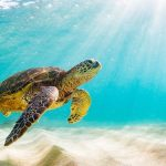 help sea turtles