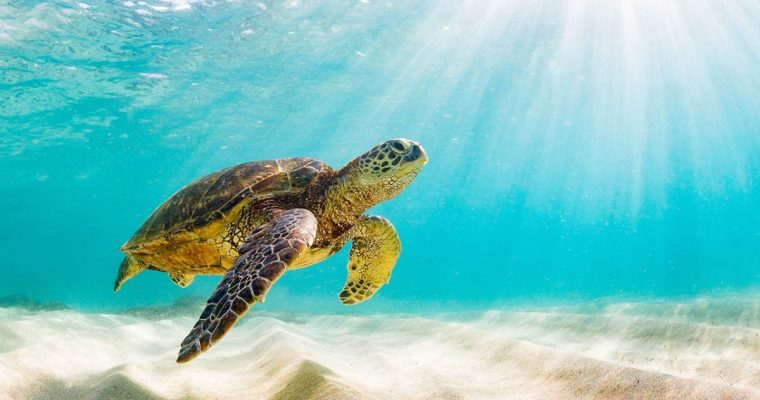 How To Help Sea Turtles on Your Next Vacation