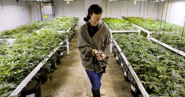 Four In-Demand Jobs in the Cannabis Industry